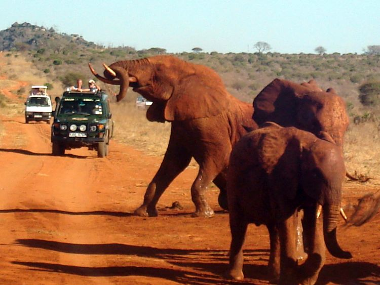 Safari Kenia - Rode olifanten in Tsavo - Reisvlinder.nl