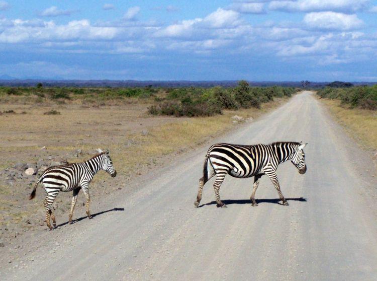 Safari Kenia - Amboseli - Reisvlinder.nl