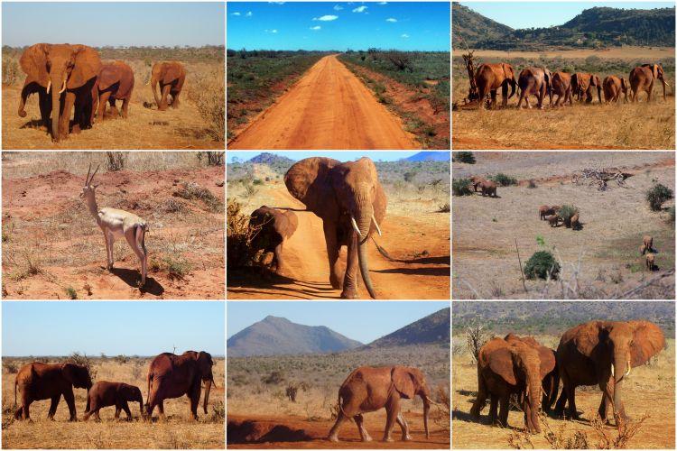 Safari Kenia - Rode olifanten Tsavo - Reisvlinder.nl