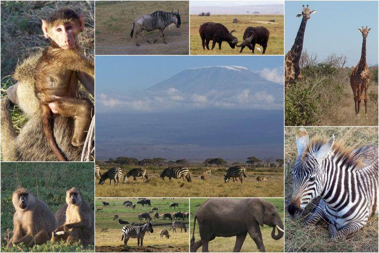 Safari Kenia - Amboseli Kilimanja - Reisvlinder.nl