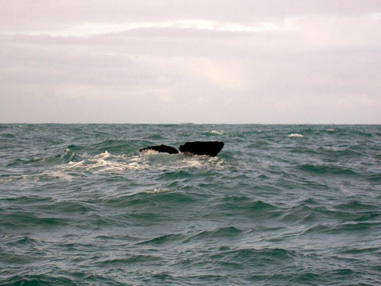 walvissen spotten - kaikoura nieuw zeeland