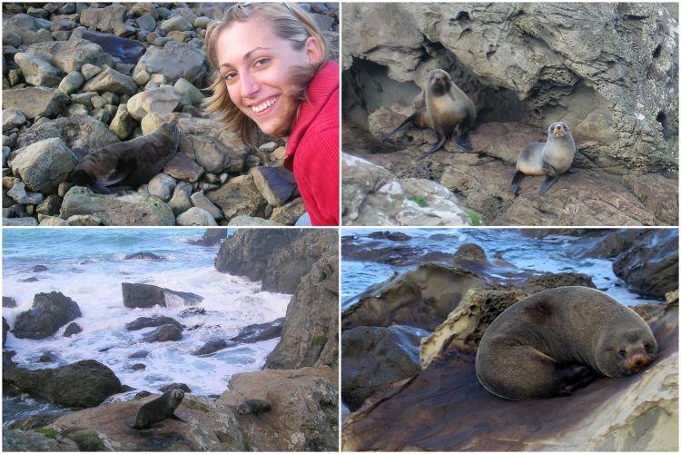 Walvissen spotten Kaikoura Nieuw-Zeeland - Zeehondenkolonie Ohau Point