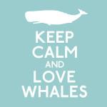 Walvissen spotten met een kater