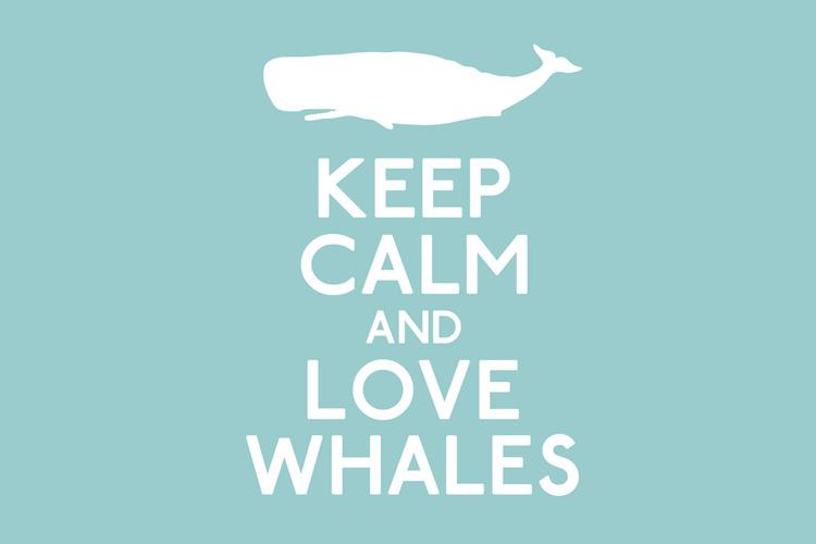 Walvissen spotten Kaikoura Nieuw-Zeeland