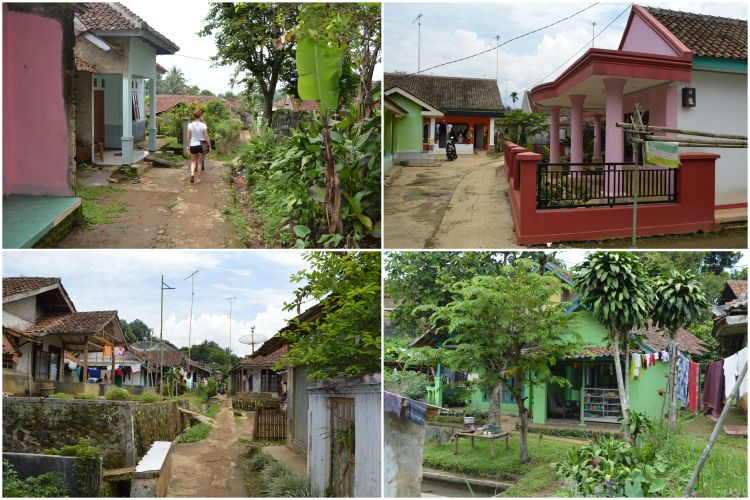 Kampoeng padi10