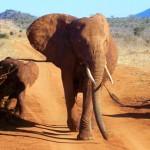 Op zoek naar de BIG 5 in Kenia