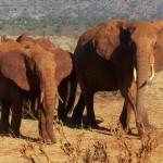 Een reeks onvergetelijke reismomenten in Kenia