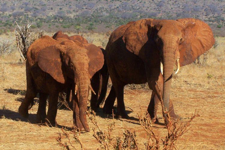 populairste blogs: mooie reismomenten kenia