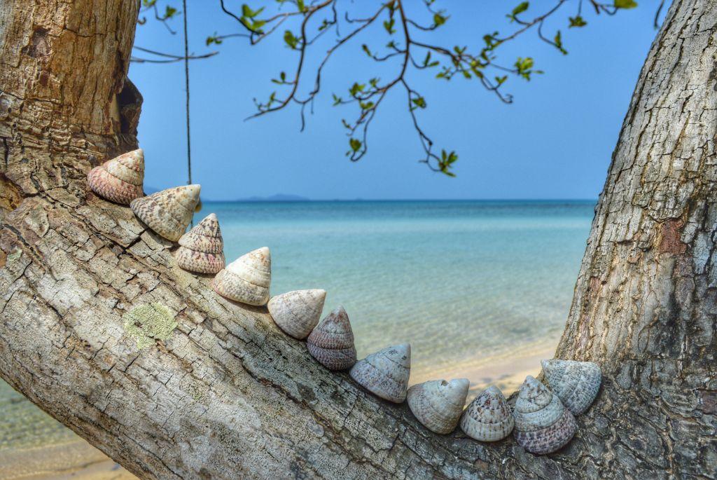 koh mak thailand - turtle beach