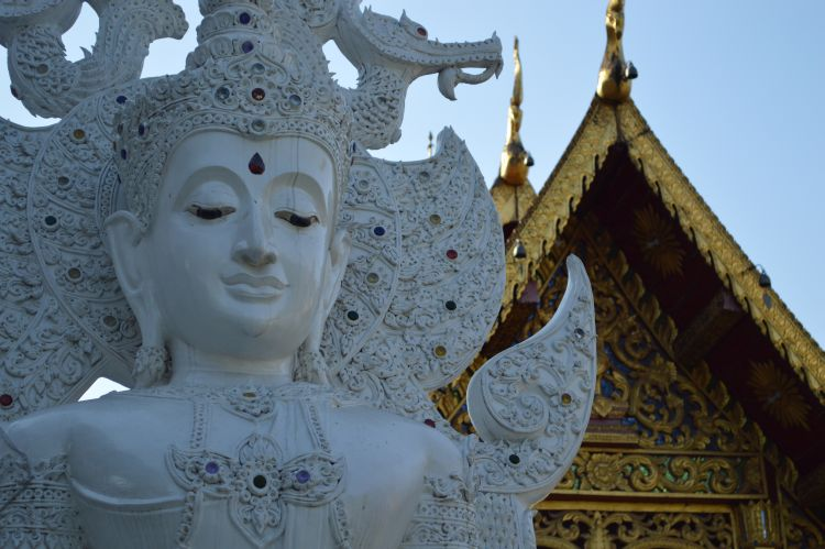 witte reisfoto's chiang mai