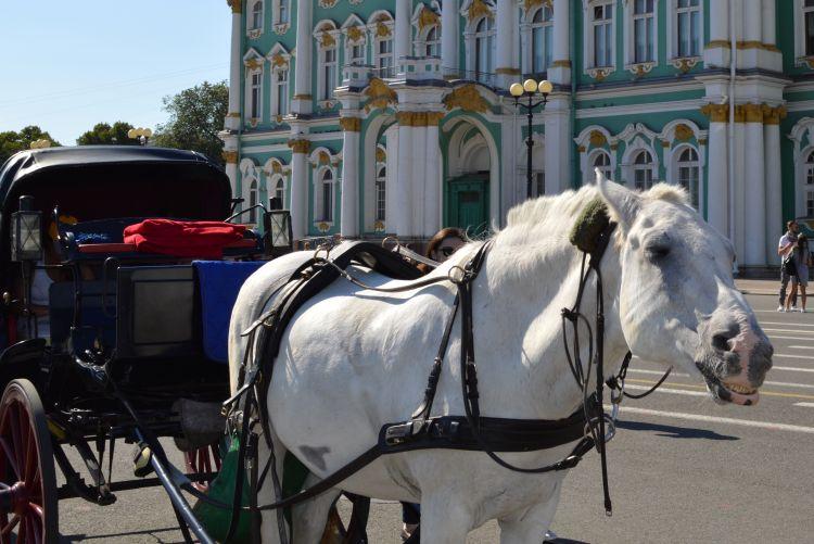 witte reisfoto's Sint Petersburg hermitage