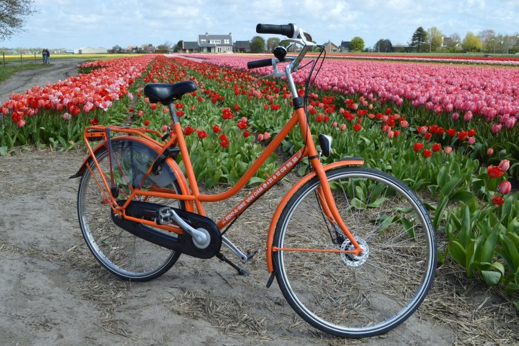 fietsen in de bollenstreek - rent a bike van dam