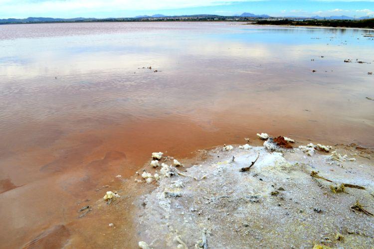 roze zoutmeer torrevieja (8)