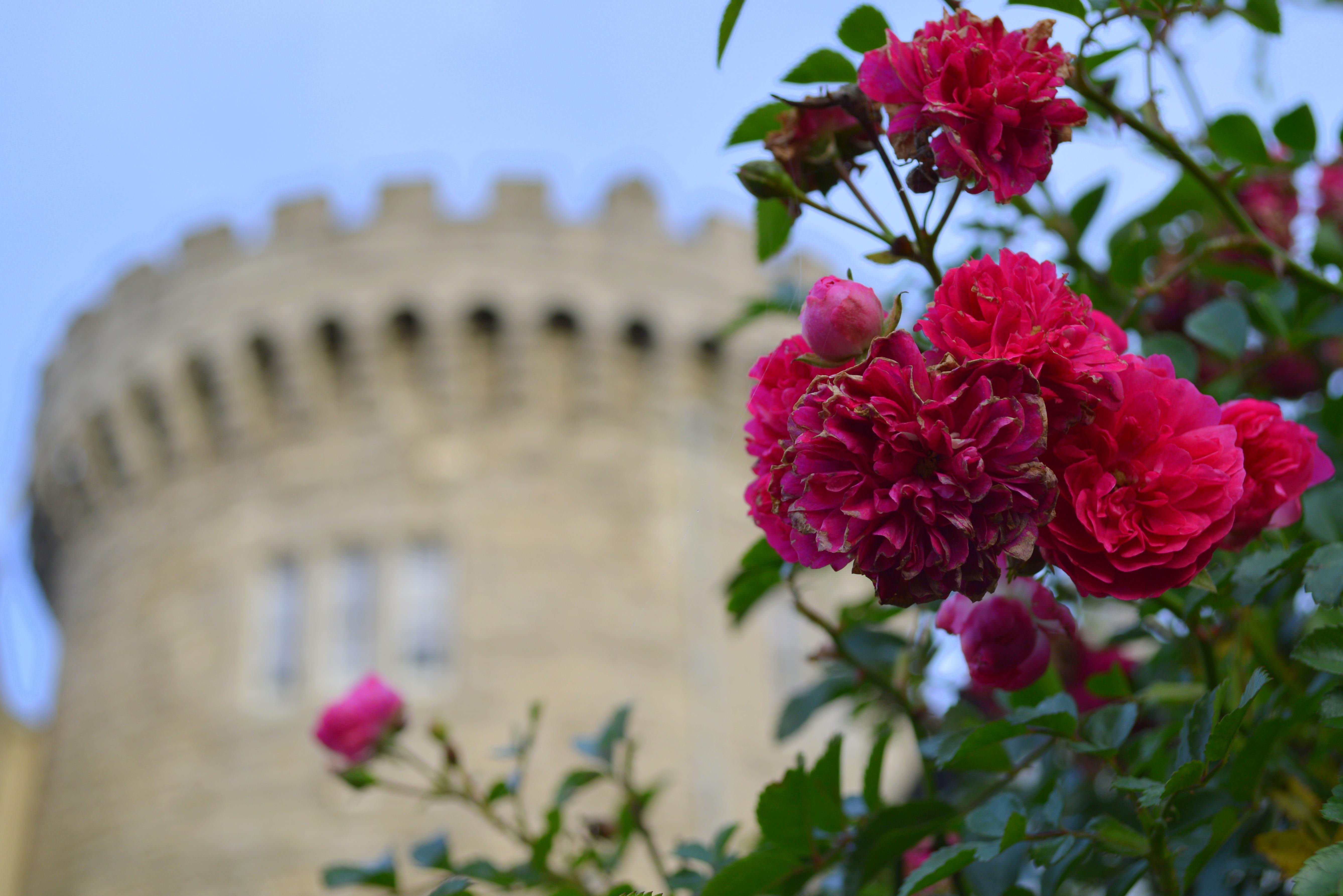 roze reisfoto's (6)