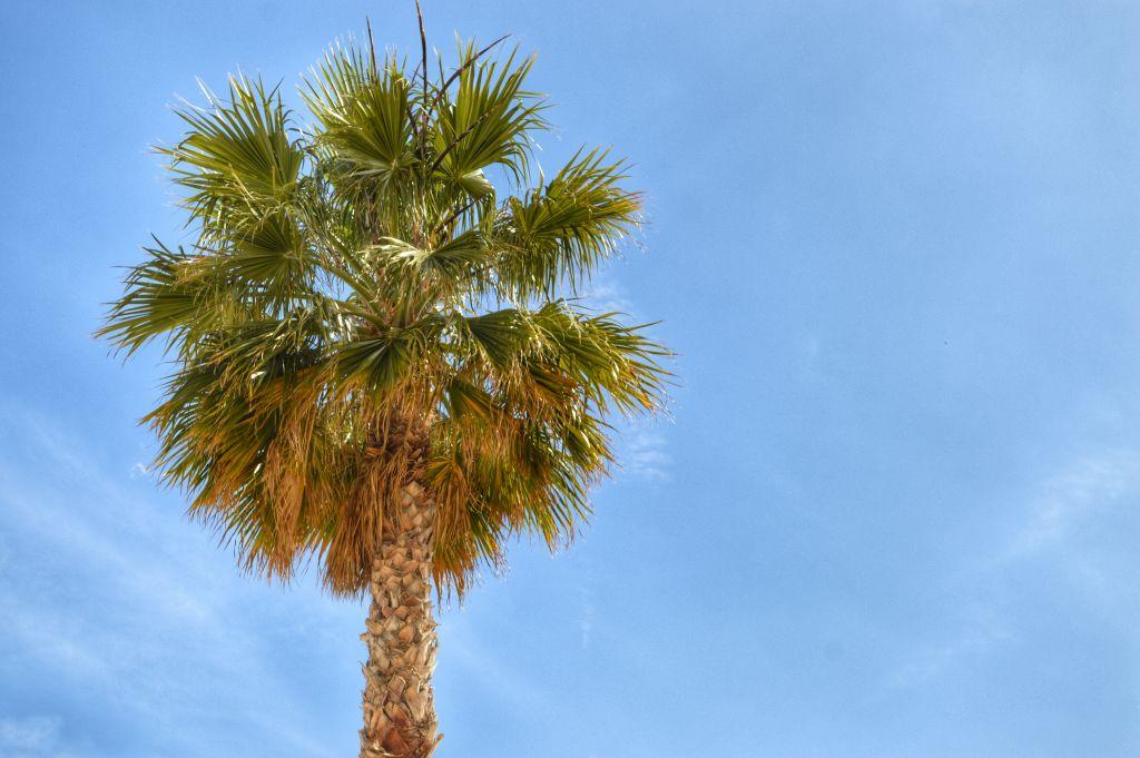 wat te doen in Alicante - park