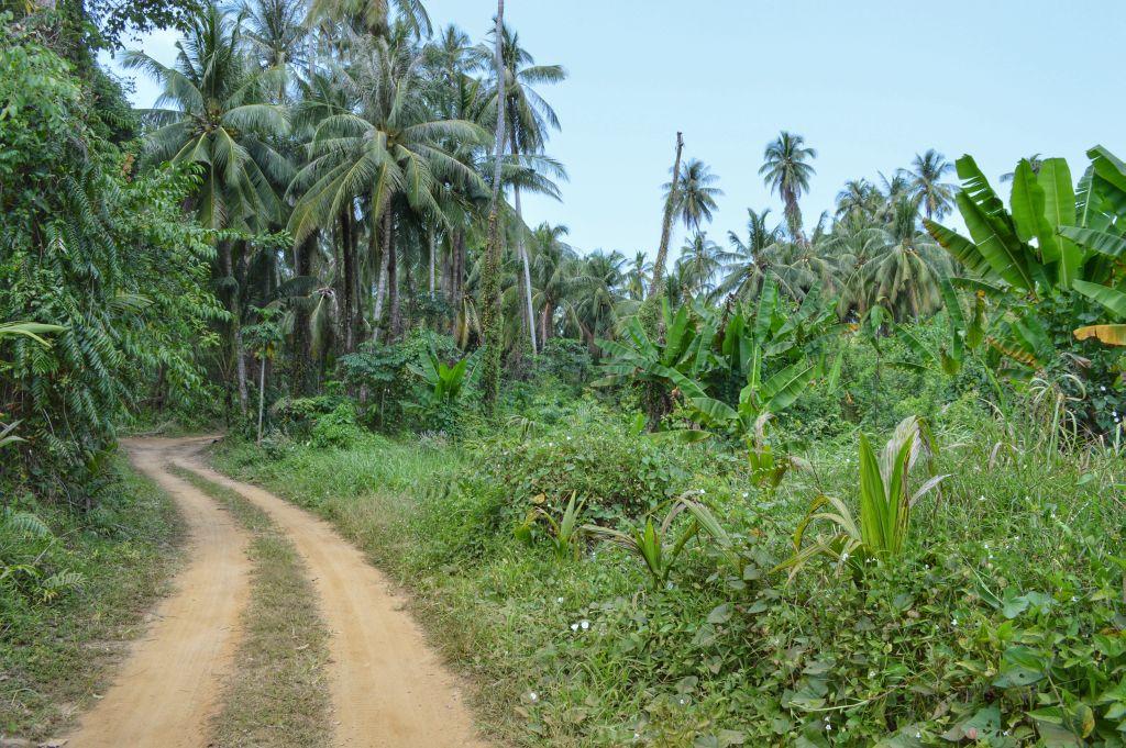 fietsen op koh mak - wegen palmbomen