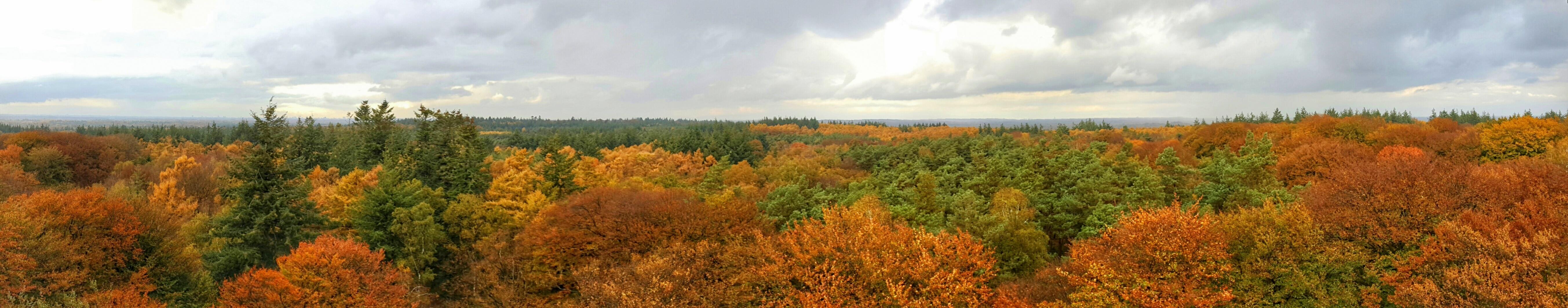 mooie plekken utrechtse heuvelrug - uitkijktoren kaapse bossen