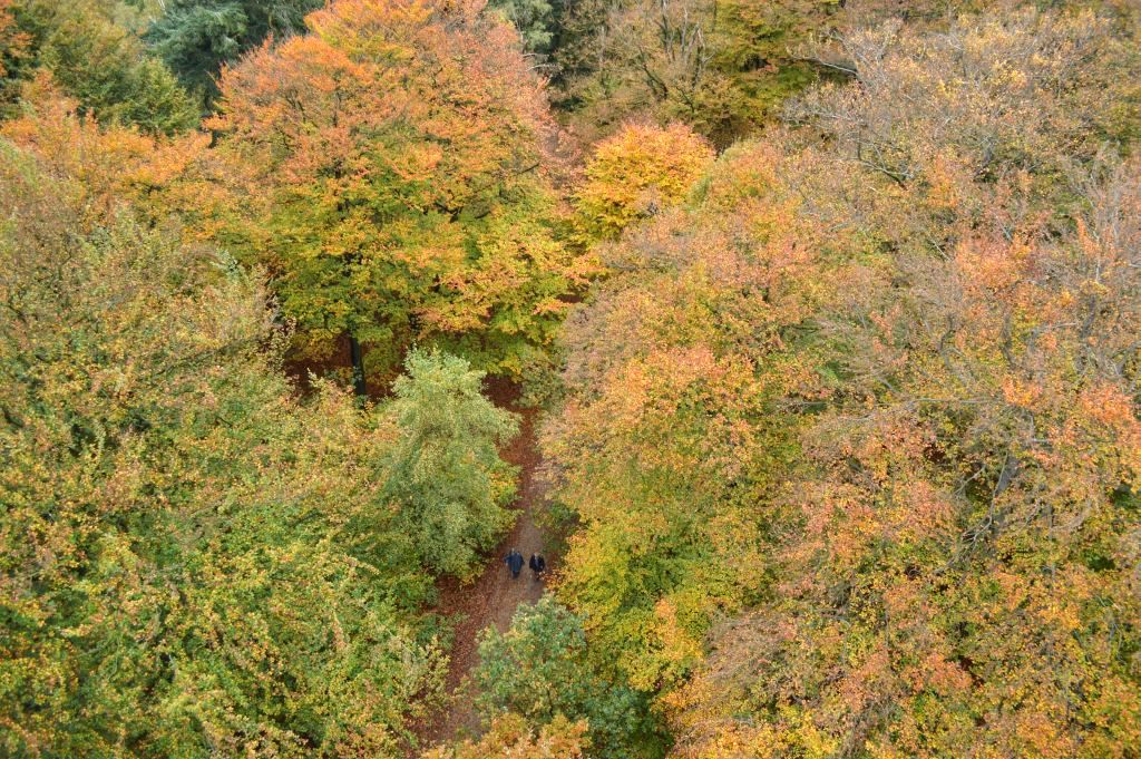 utrechtse heuvelrug mooie plekken - kaapse bossen