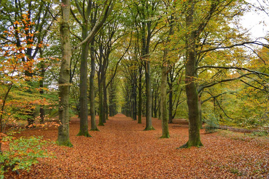 mooie plekken utrechtse heuvelrug - kaapse bossen
