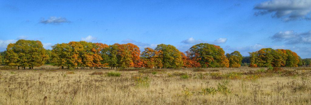 mooie plekken utrechtse heuvelrug - plantage willem III