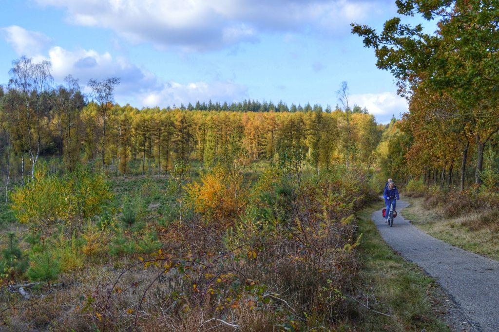 mooie plekken utrechtse heuvelrug - prattenburgse bos