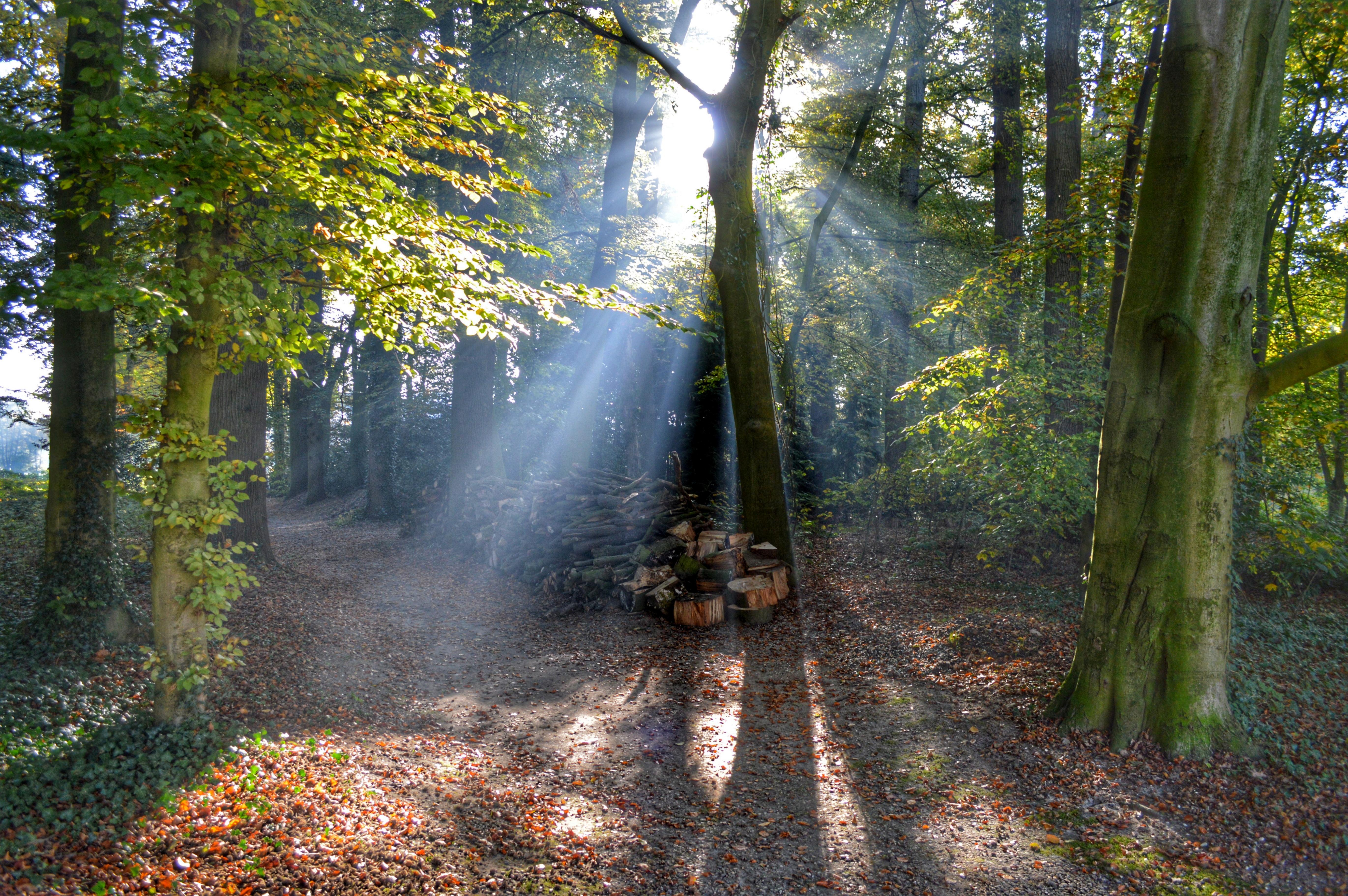 mooie plekken utrechtse heuvelrug - kasteelbos renswoude