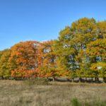 Fotoserie: herfst op de Utrechtse Heuvelrug