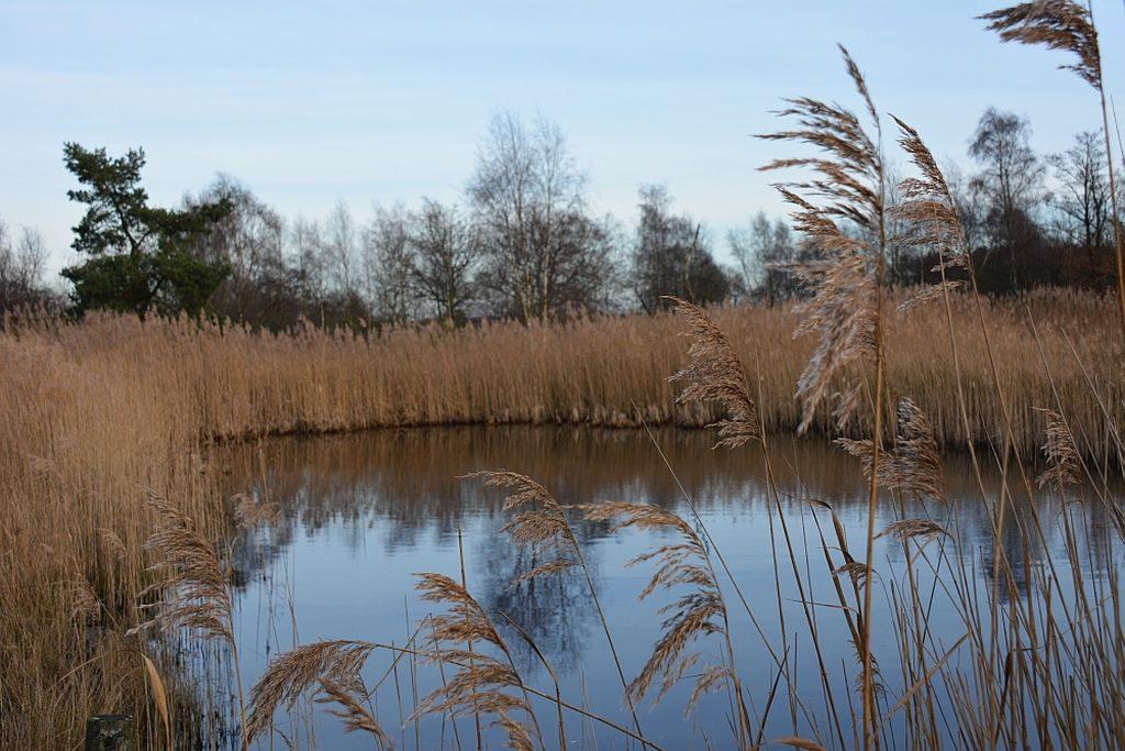 Mooiste plekken Nederland: het Plateaux Hageven