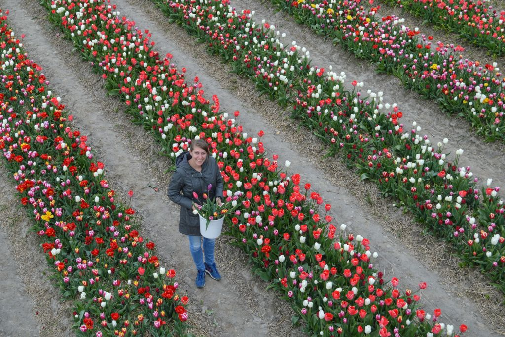 bollenvelden-noordoostpolder-tulpen-10