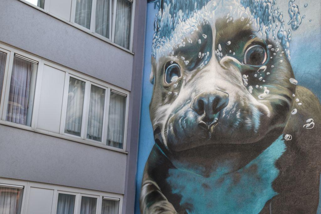 onderwaterhond muurschildering mechelen