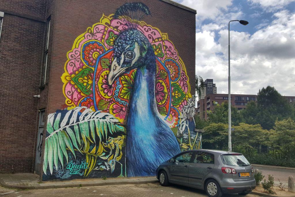 pauw muurschildering Eindhoven