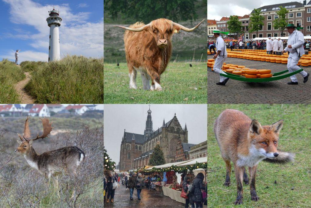Noord-Hollandse kust: Egmond, Schoorl, Zandvoort, Haarlem en Alkmaar