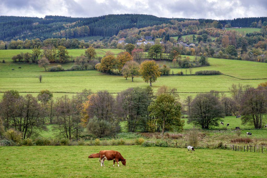 De Belgische Ardennen in de herfst