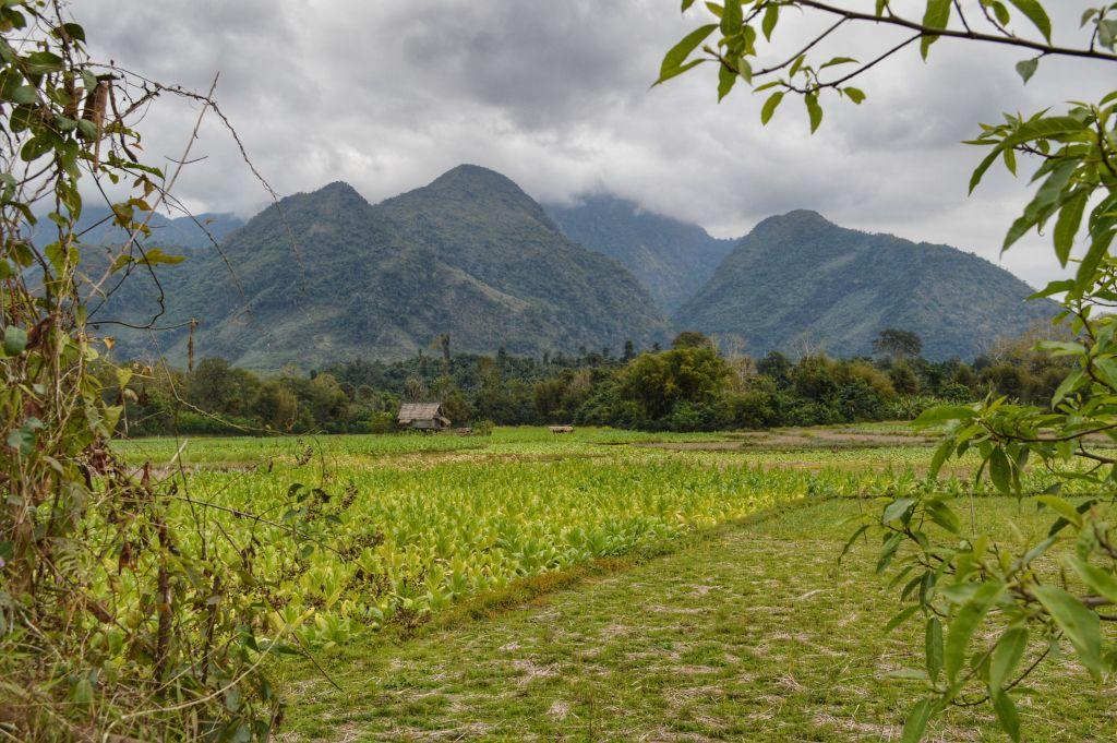Groene omgeving Nong Khiaw Laos