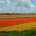 Voor op je bucketlist: 11 must do's in Nederland