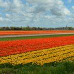 Voor op je bucketlist: 11 must do's in Nederland