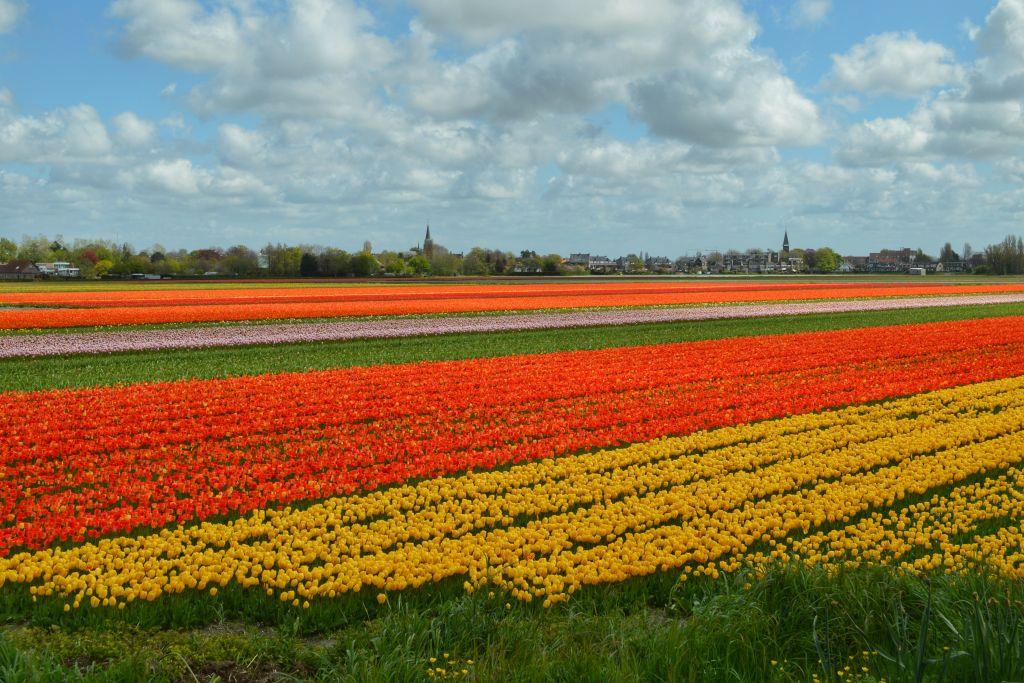 Wat te doen in Nederland? Leuke activiteiten