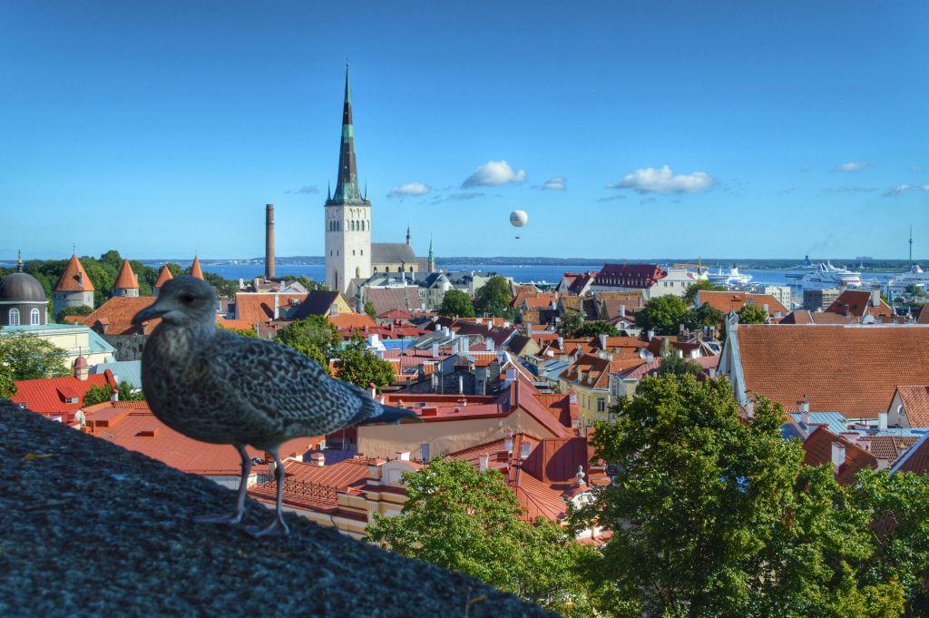 Kohtu viewpoint Tallinn