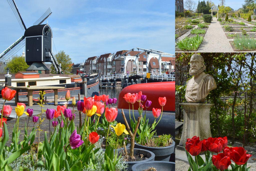 Tulpen Leiden