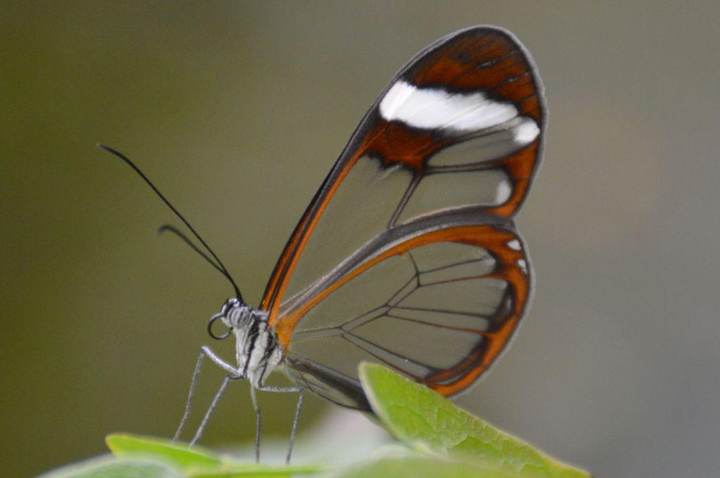 Vlindertuin Harskamp