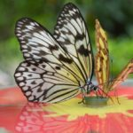 Leuk uitje op de Veluwe: de tropische vlindertuin