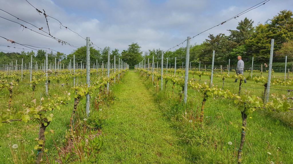 Wijngaard De Kroon Texel