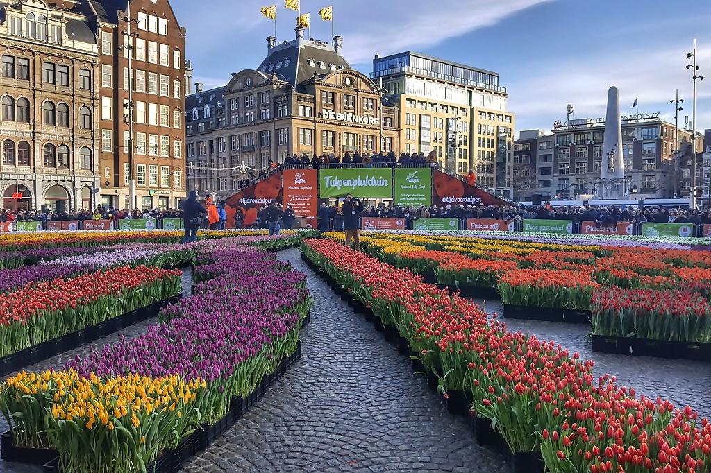 Tulpenplukdag Amsterdam