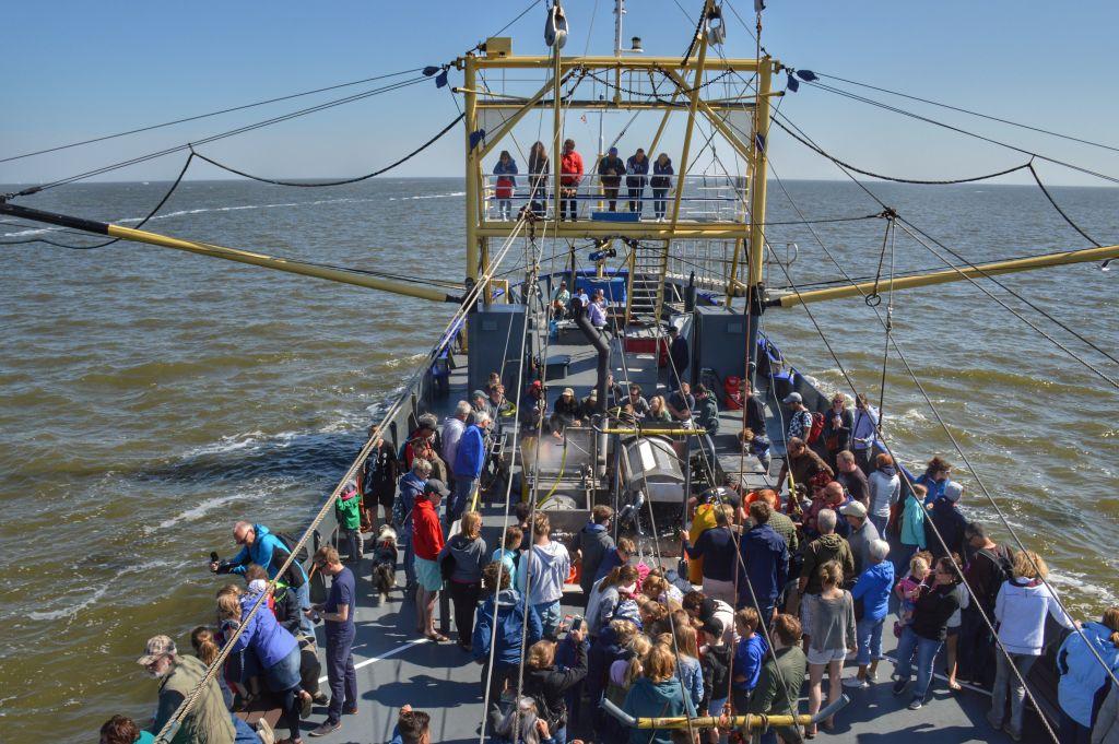Garnalenvissen Texel