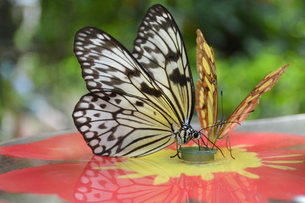 Tropische vlindertuin Veluwe
