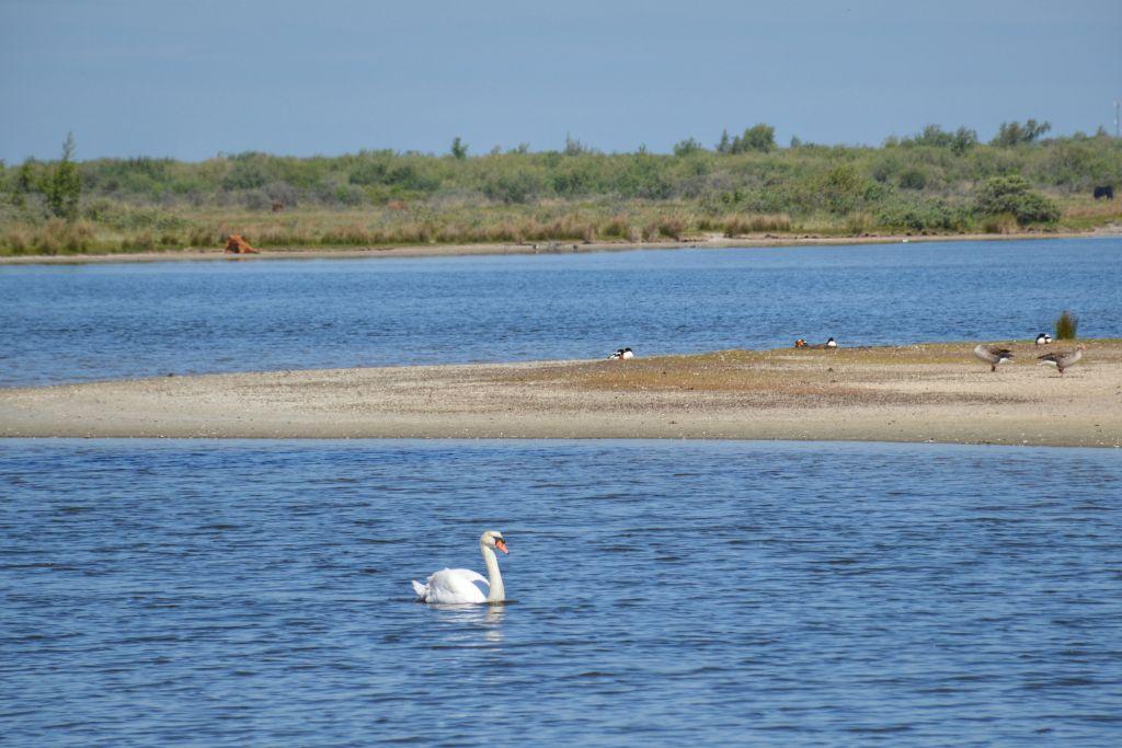 Watervogels Slikken van Flakkee