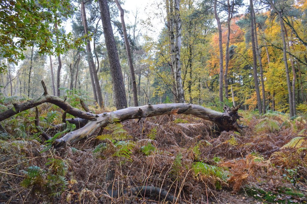 Sprookjesachtig bos Grebbeberg