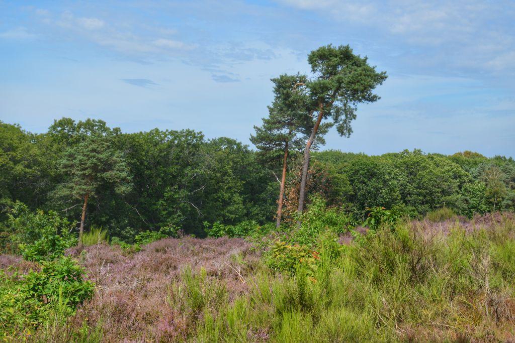 Wandelroute Mookerheide Limburg
