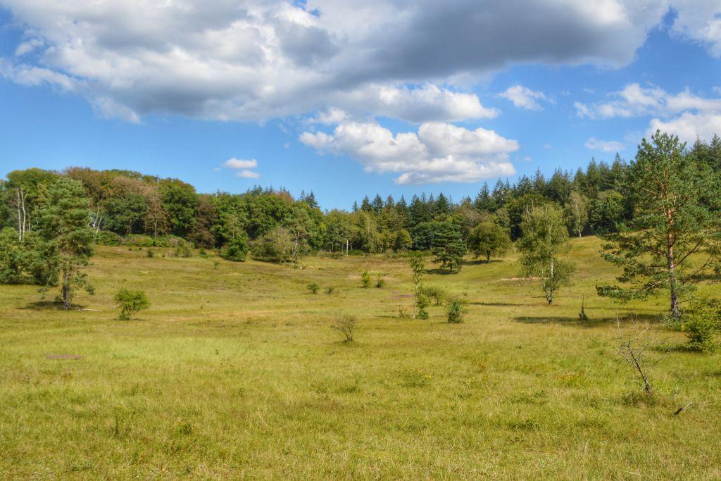 Natuurgebied de Paltz - Soest