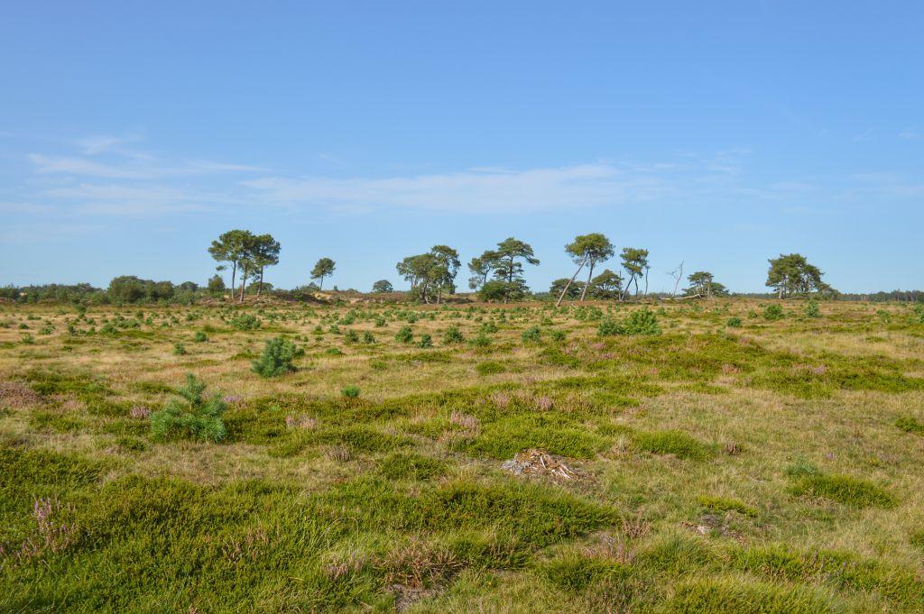Landschap Drents-Friese Wold